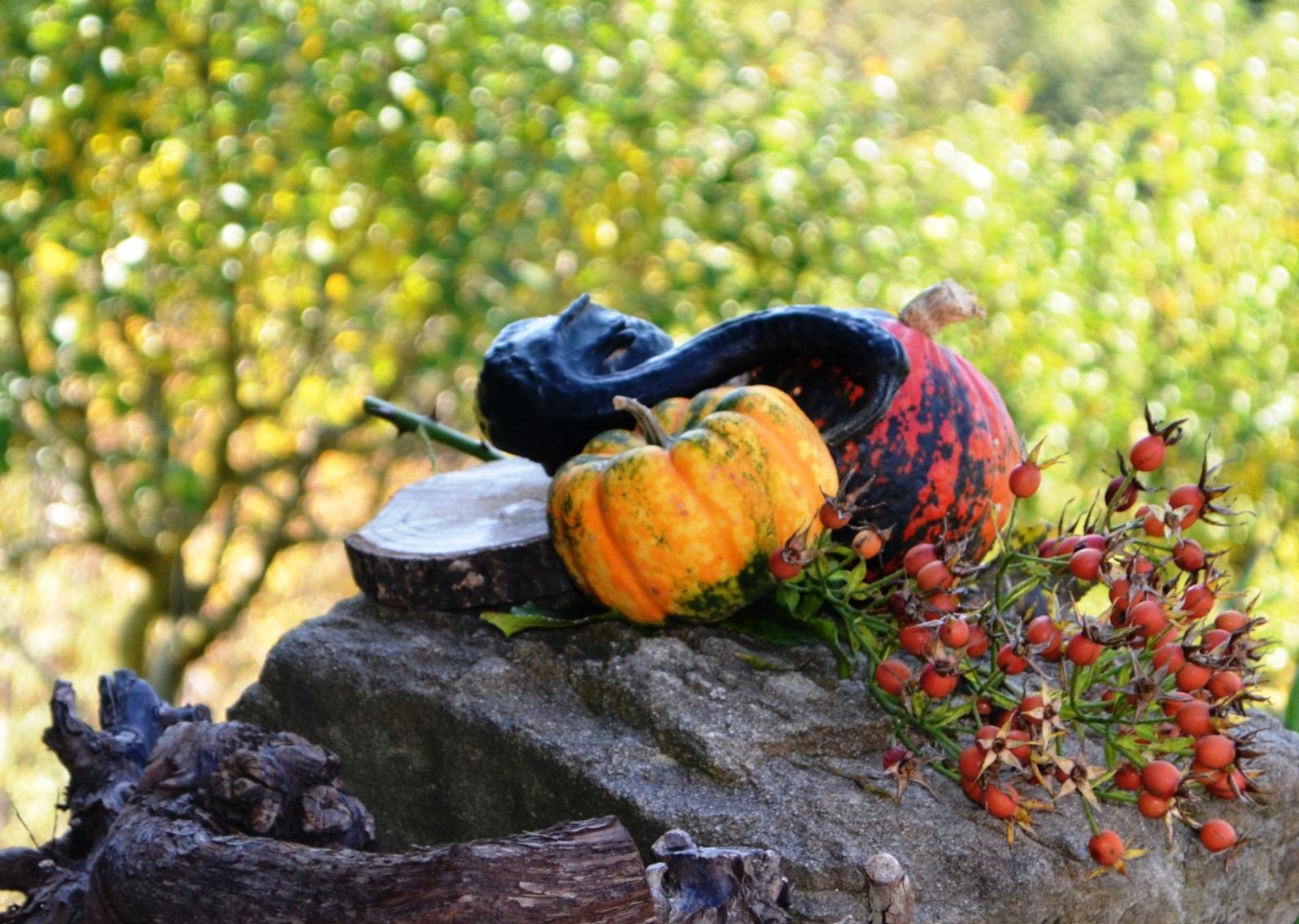 Herbst in der Südsteiermark